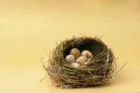 codorniz: Huevos de codorniz en el nido