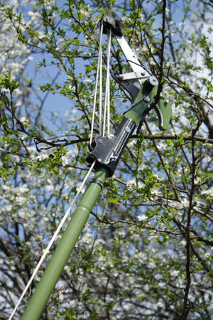 pruning: garden scissors while out pruning
