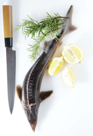Raw sterlet with lemon and rosemary Stock Photo - 4901613