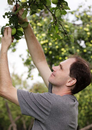 gatherer: Man working in a garden
