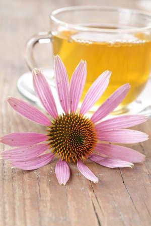 Echinacea purpurea flower against the cup of herbal tea photo