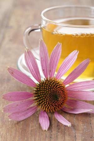 echinacea purpurea: Echinacea purpurea fiore contro la tazza di t� alle erbe