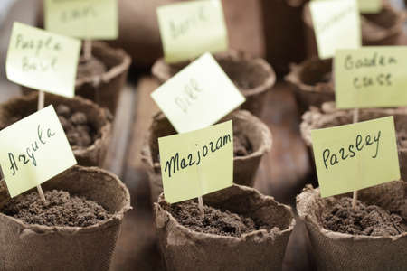 planted: Labeled jiffy pots with planted seeds of vegetables Stock Photo