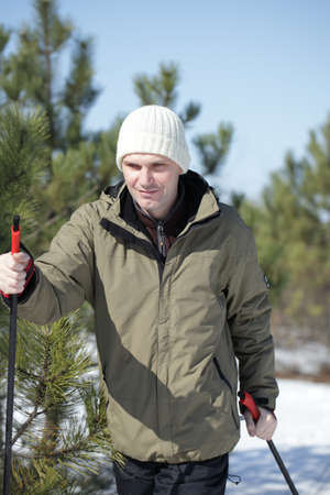 Cross-country skiing in the winter pine forest photo