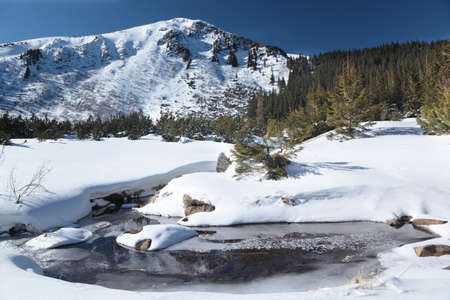 Mountain river under snow against fir forest Stock Photo - 11527033