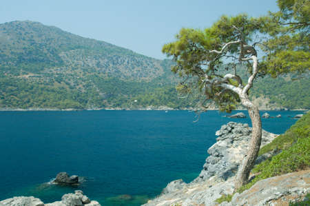 Pine tree against scenic bay of Mediterranean sea photo