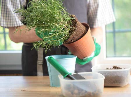 etiquetado con plantado semillas de hortalizas en macetas de jiffy