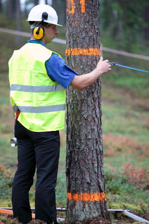 tree felling: Raubichi, Minsk region, Belarus - August 25, 2012: Judges prepare the site for tree felling during World Logging Championship in Raubichi, Minsk region, Belarus at August 25, 2012