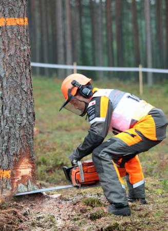 tree felling: Raubichi, Minsk region, Belarus - August 25, 2012: Japanese Akita Mitsugi performs tree felling during World Logging Championship in Raubichi, Minsk region, Belarus at August 25, 2012