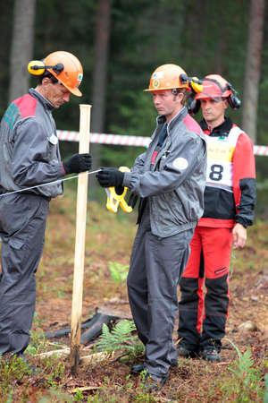 tree felling: Raubichi, Minsk region, Belarus - August 25, 2012: Technical staff prepare the site of tree felling for Richard Elliott (right) from UK during World Logging Championship in Raubichi, Minsk region, Belarus at August 25, 2012