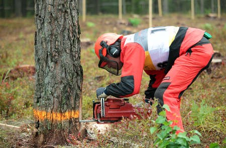 tree felling: Raubichi, Minsk region, Belarus - August 25, 2012: Richard Elliott from United Kingdom performs tree felling during World Logging Championship in Raubichi, Minsk region, Belarus at August 25, 2012