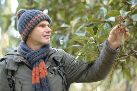 ropa de invierno: El hombre en ropa de invierno en busca de hojas de n�spero