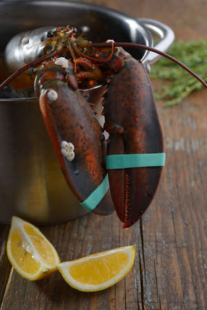 clawed: Clawed lobster in a pan before cooking Stock Photo