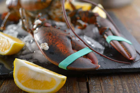 clawed: Clawed lobster on a table before cooking. Focus on claws