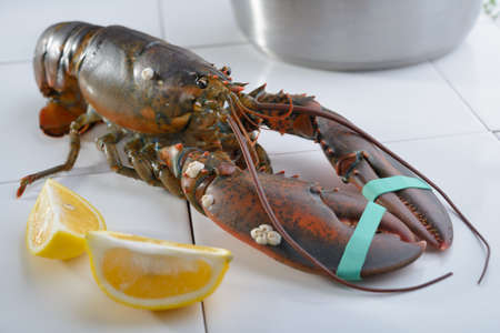 clawed: Clawed lobster on a table before cooking Stock Photo