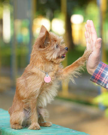 High five between the man and his dog photo