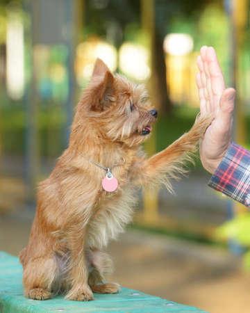 High five tussen de man en zijn hond