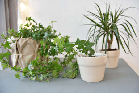 houseplants: Houseplants on a gray table