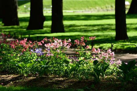 flowerbed: Flowerbed in a city garden