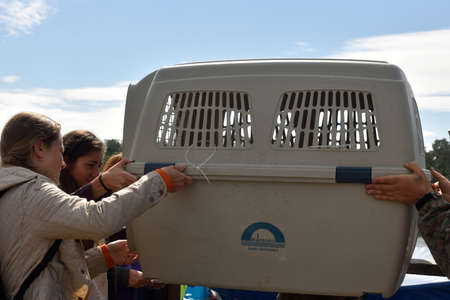 ladoga: Valaam island, Russia - July 29, 2015: People carrying the cage with Ladoga ringed seal from the ship. Animals was cured in the Center of study and conservation of marine mammals and released into the lake Ladoga