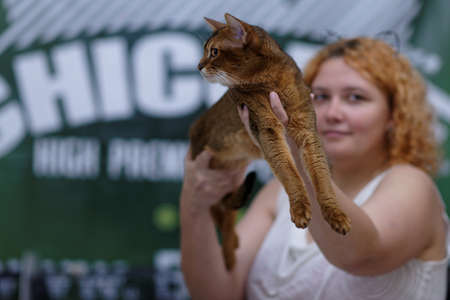 abyssinian cat: St. Petersburg, Russia - October 11, 2015: Female owner with her Abyssinian cat during Exotica cat show in the mall Piterland. The show was held by the World Cat Federation rules