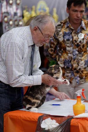 St. Petersburg, Rusland - 11 oktober 2015: Klaas van der Wijk met de kat tijdens Schotse vouwen show in het winkelcentrum Piterland. De show werd gehouden door de World Cat Federation regels Stockfoto - 46439186