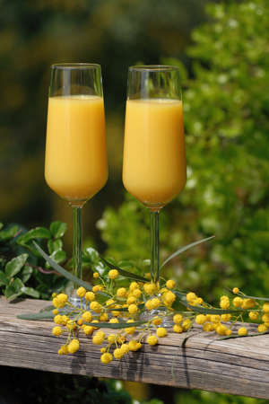 lush foliage: Two glasses of mimosa cocktail outdoors against lush foliage