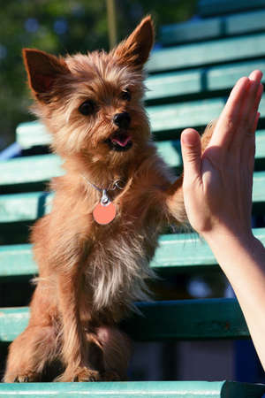 High five between the woman and her dog Stock Photo