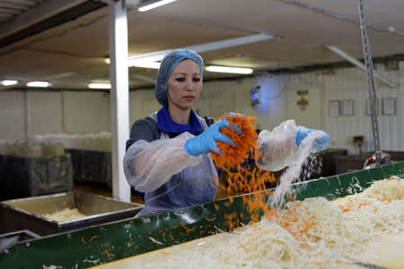 food plant: St. Petersburg, Russia - February 28, 2017: Female worker adding salt and carrot into shredded cabbage. The Factory of Homemade Pickles participates in the regional quality certification program St. Petersburg Quality Mark