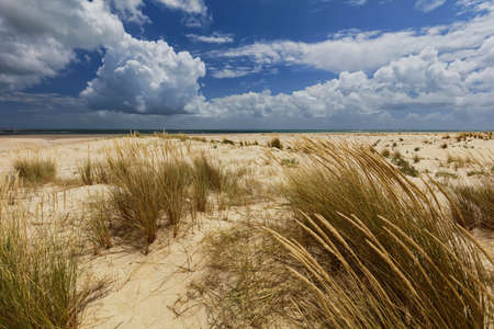 formosa: Sandy beach on an deserted island in Ria Formosa Natural Park, Portugal Stock Photo