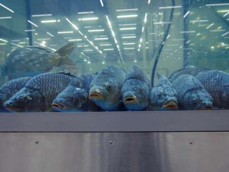 Big carps in the aquarium on fish market