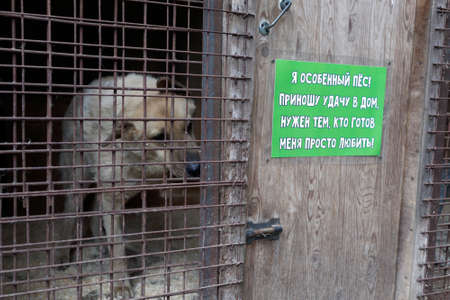 st: St. Petersburg, Russia - June 30, 2017: Dog in the shelter for homeless animals. The label: