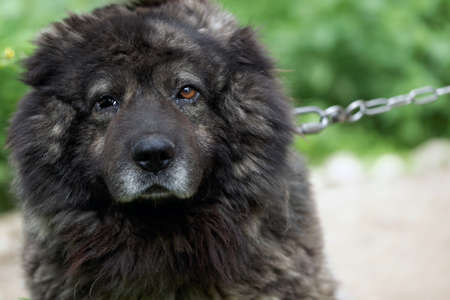 Dog in the shelter for homeless animals Stock Photo