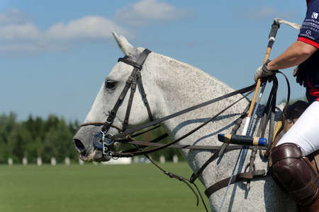 Tseleevo, Moscow region, Russia - July 26, 2014: Jacqueline Hooper in the match during the British Polo Day. Tseleevo Golf & Polo Club hosts the event for the second time