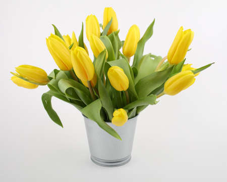 Bouquet of yellow tulips in bucket isolated on white Stock Photo