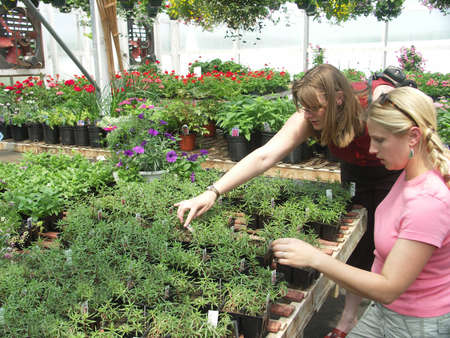 Two women shopping for plants and flowers at a greenhouse.