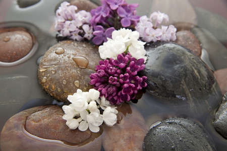 Rocks and lilac flowers in a bowl with water. Shallow DOF.