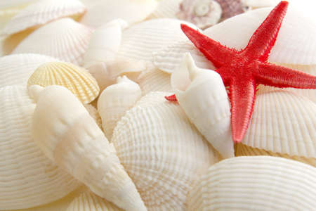 A single starfish rests on a pile of shells