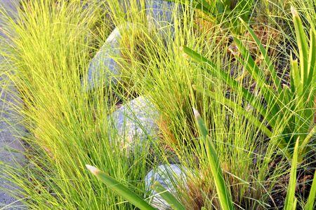 식물과 돌