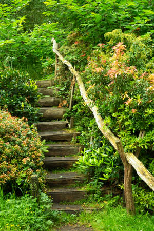 Stairs in a vibrant green patch of nature. Stock Photo