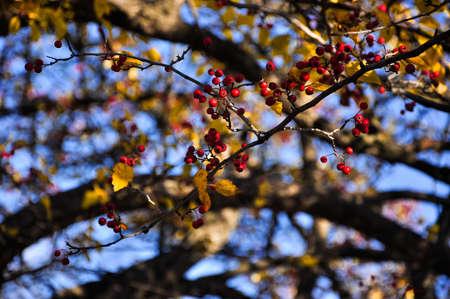 나무의 가지를 통해 가을 하늘 스톡 콘텐츠