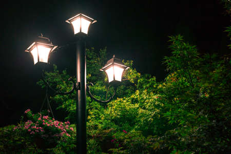 Street lights under the night light illuminate the treetops