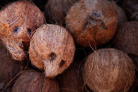 paranoia: Pile of coconuts, some of them appearing like human faces or skulls  Stock Photo