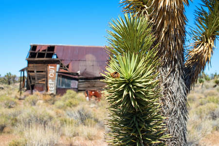 Joshua tree and abandoned house with Keep Out sign Stock Photo - 24238077