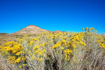 Mojave desert landscape in autumn photo