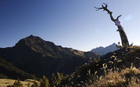 untitled key: A dead tree is watching the high mountain, looks like he is as tall as alpine.