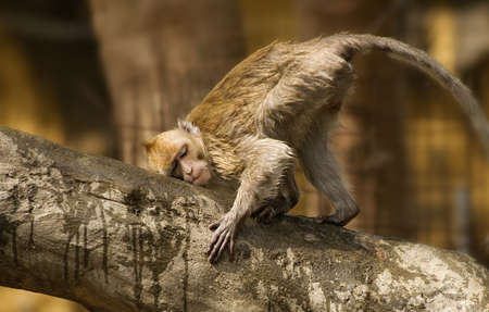 seemed: Its rare wild monkey only grown in Taiwan. He was rubbing bark and seemed happiness.