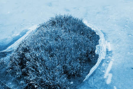 Beautiful strange iced pond surface and grass. photo