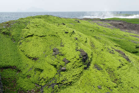 fishman: It is a green rock land and several fishman.