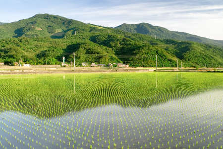 It is a beautiful green rice farm. Stock Photo - 5248570